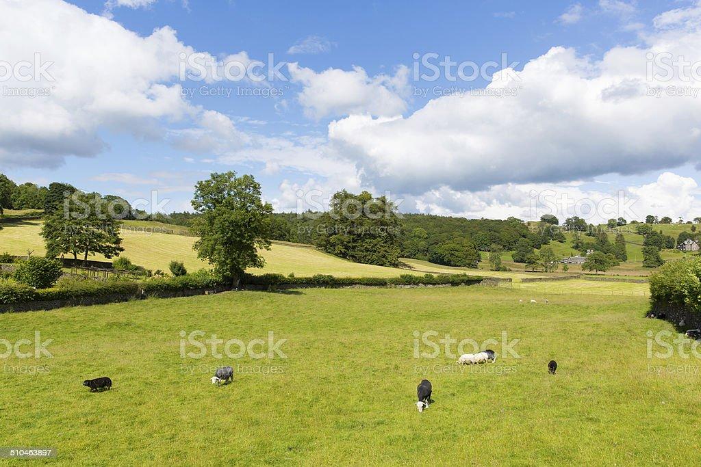 Near Sawrey village country view by Hawkshead Lake District stock photo