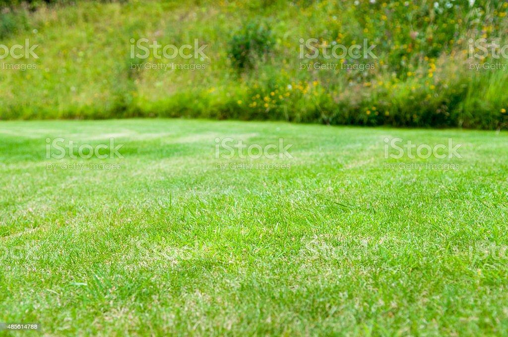Neat lawn background stock photo