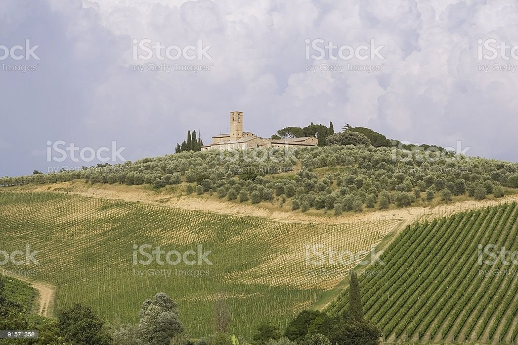 Neat Tuscan vines royalty-free stock photo