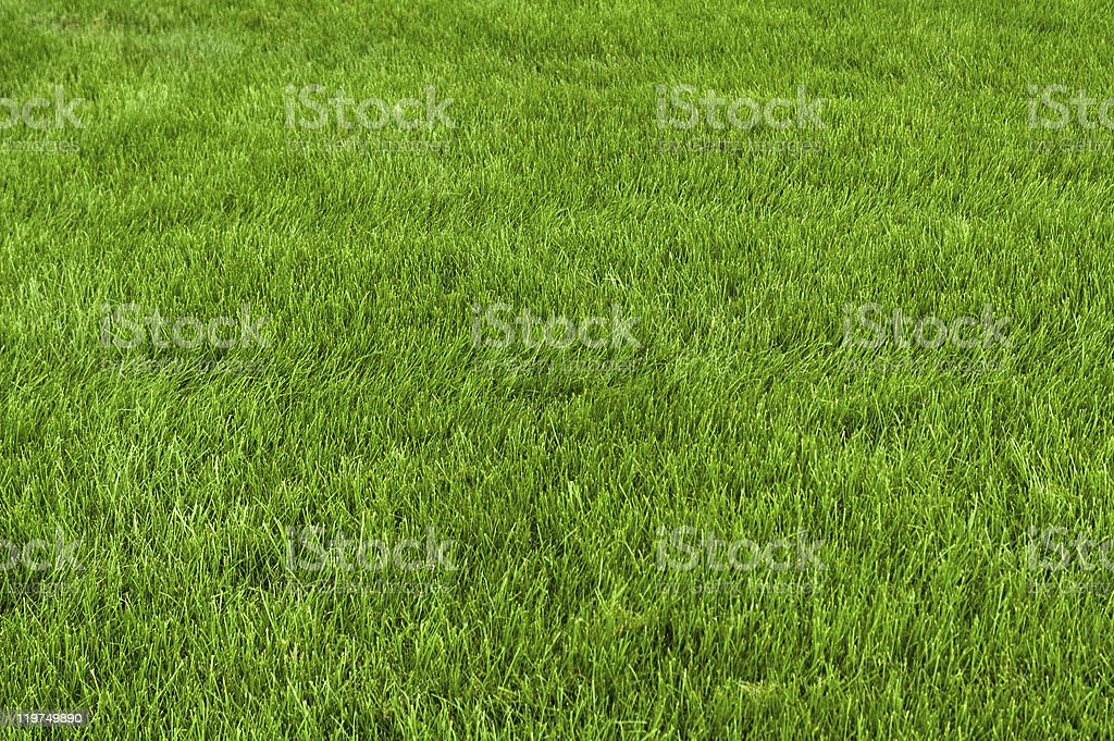 Neatly cut grass royalty-free stock photo