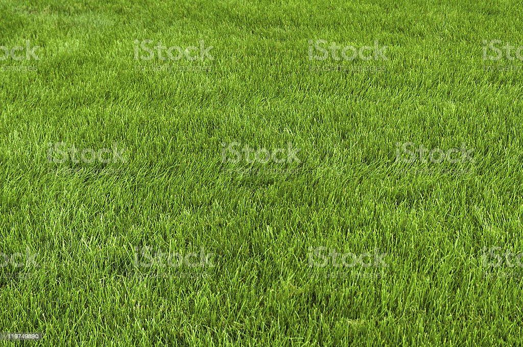 Neatly cut grass stock photo