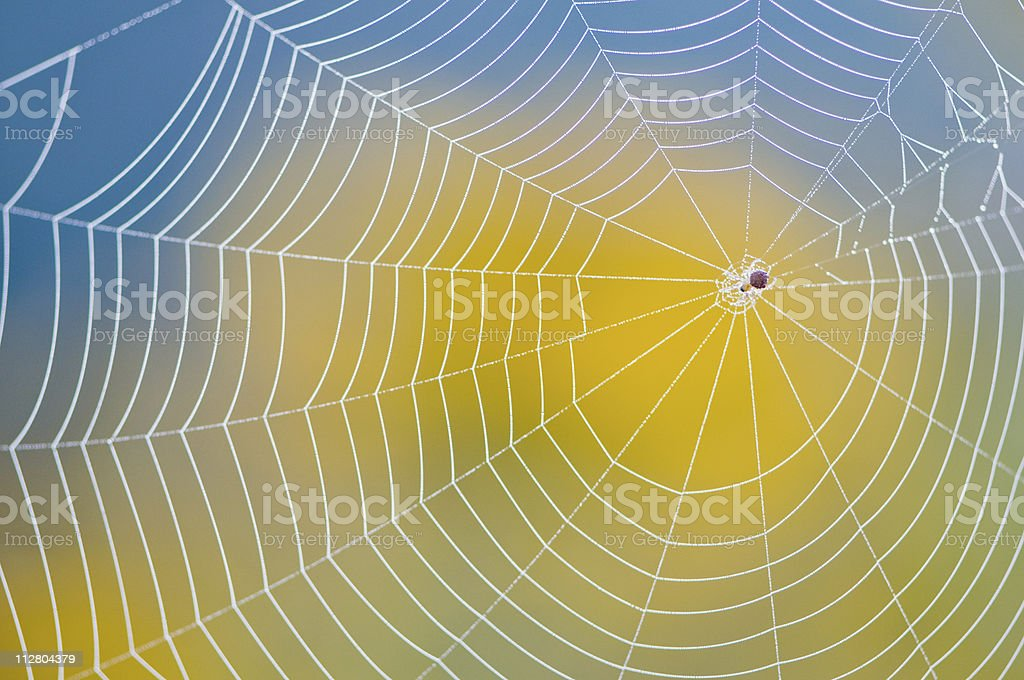 Neatly made spider web against blurred yellow and blue back stock photo