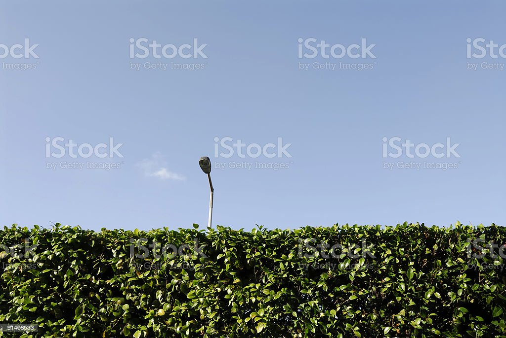 Neatly trimmed green hedge royalty-free stock photo