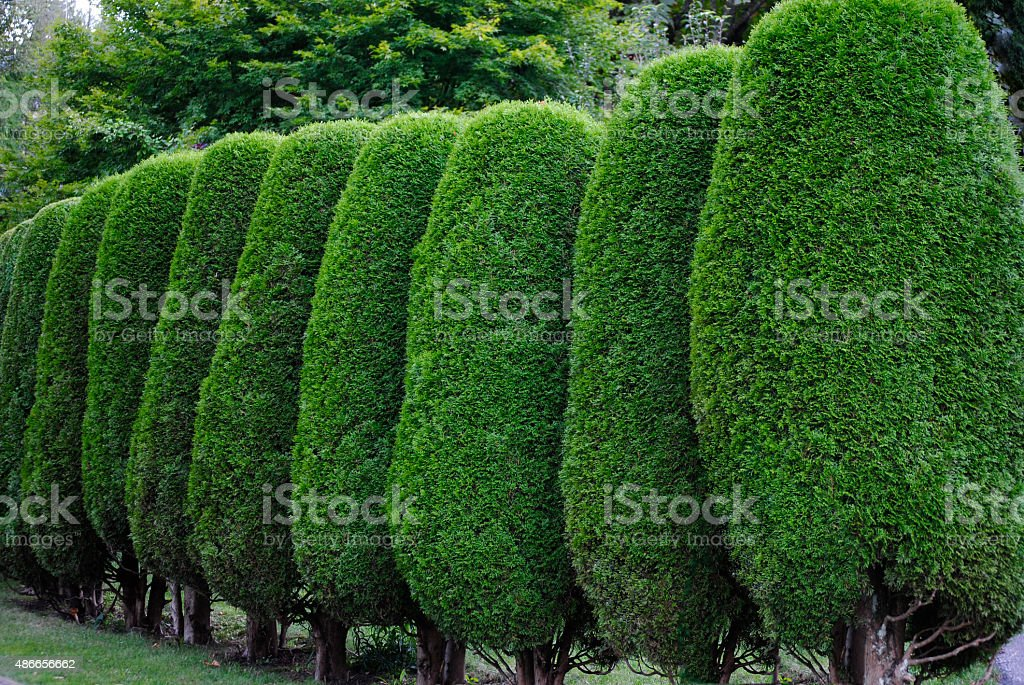 Neatly trimmed hedge stock photo
