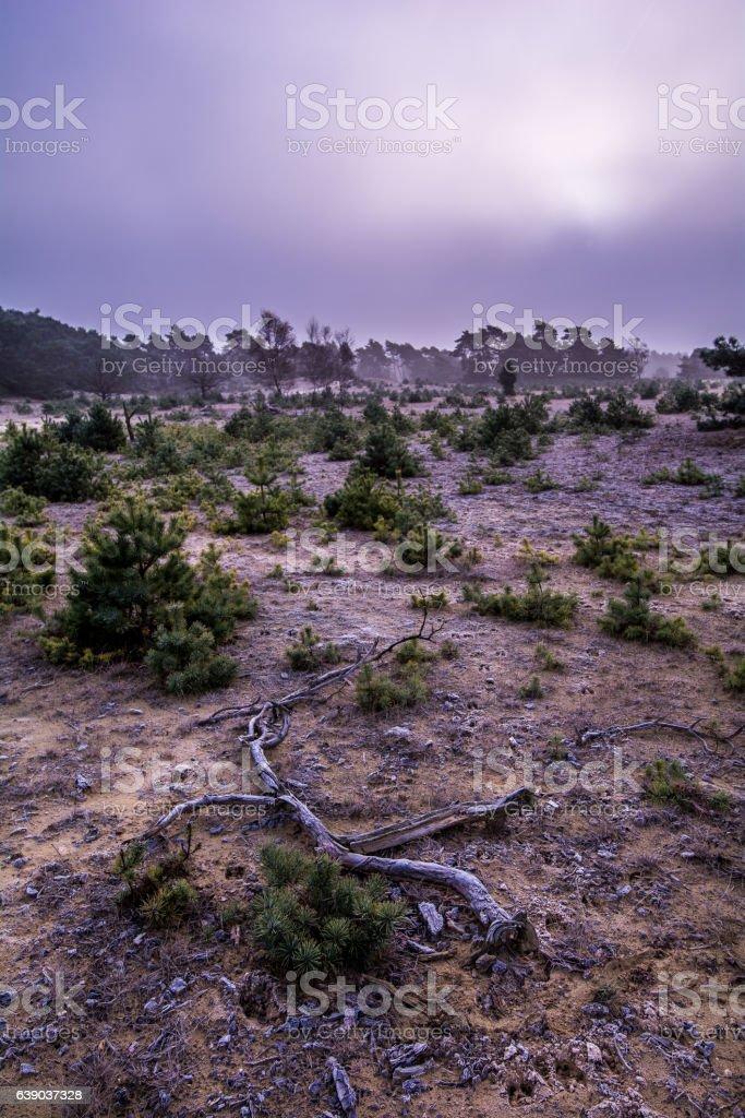Nebel in der Wildnis stock photo