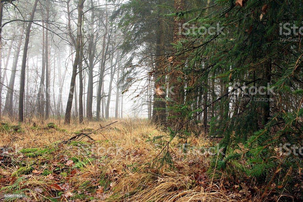 Nebel stock photo
