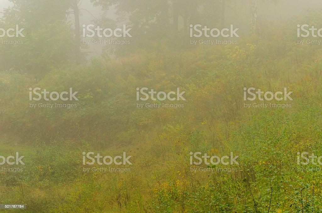 Nebeltag im Herbst stock photo