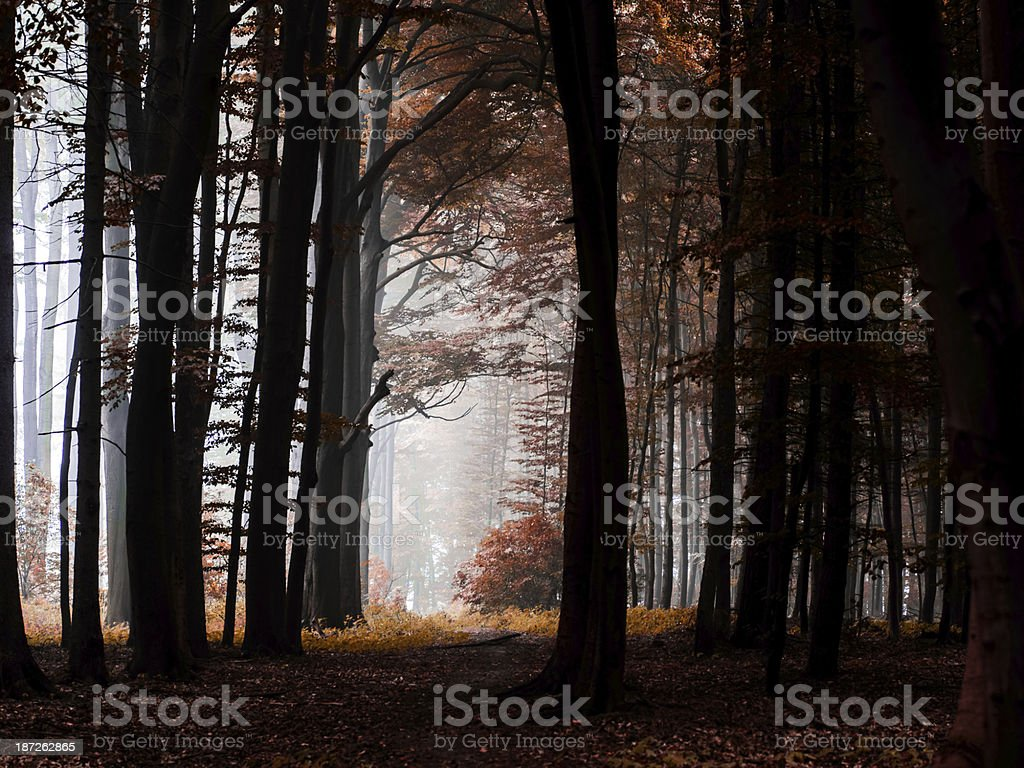 Nebliger Wald stock photo