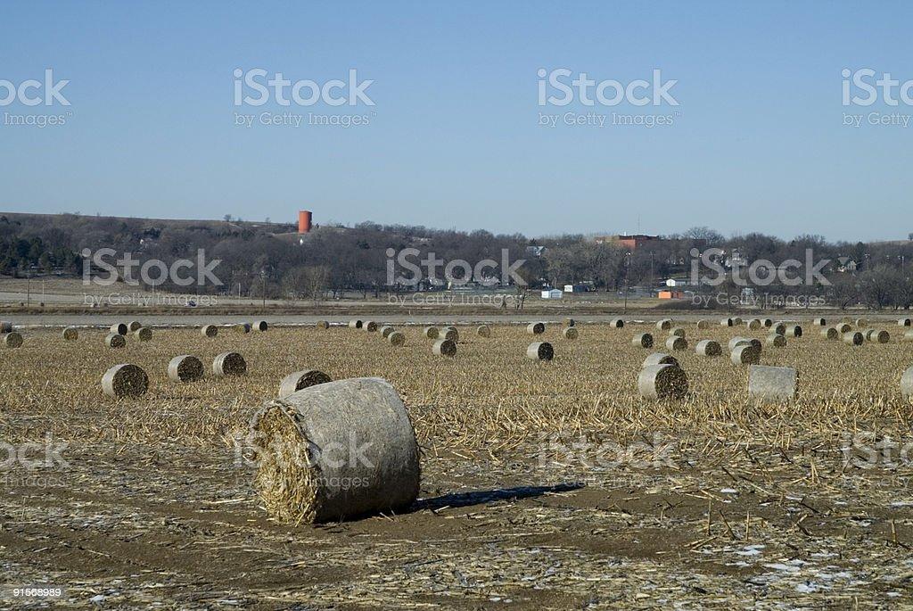 Nebraska Wheat Field royalty-free stock photo