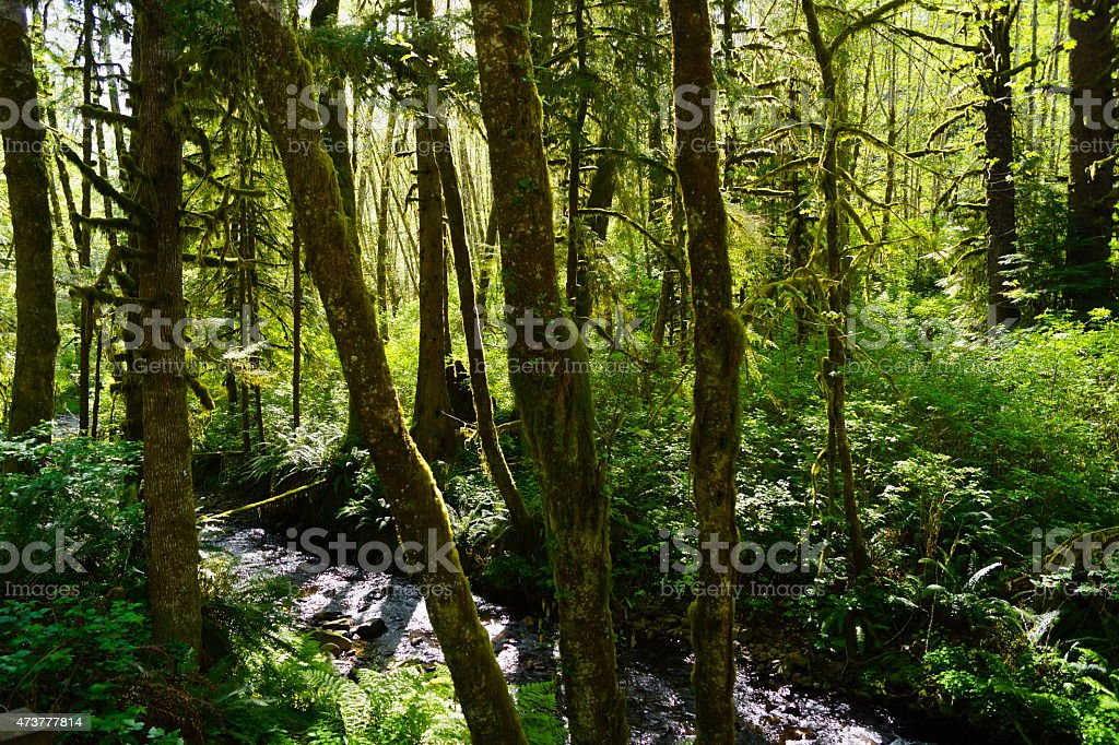 Necanicum River stock photo