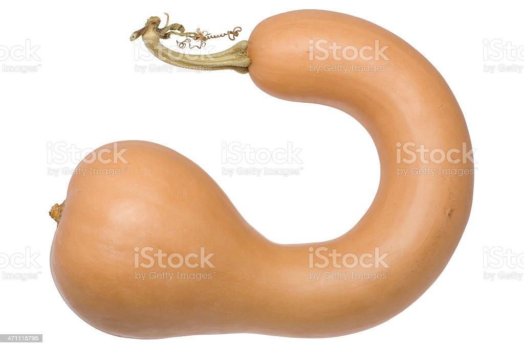 neck pumpkin (XL) royalty-free stock photo