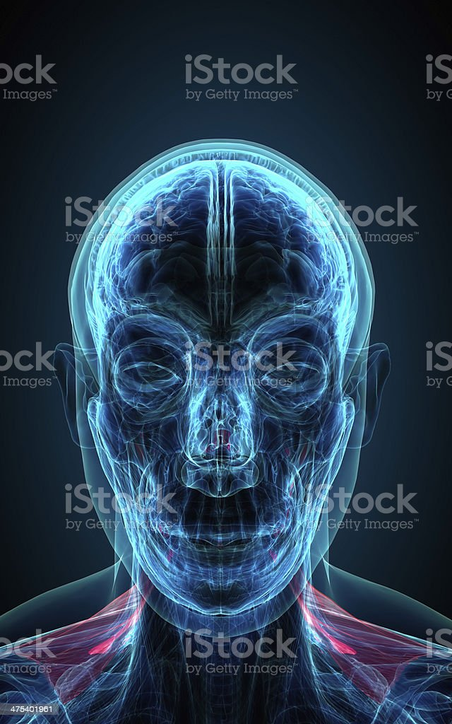 neck x-ray human male body royalty-free stock photo
