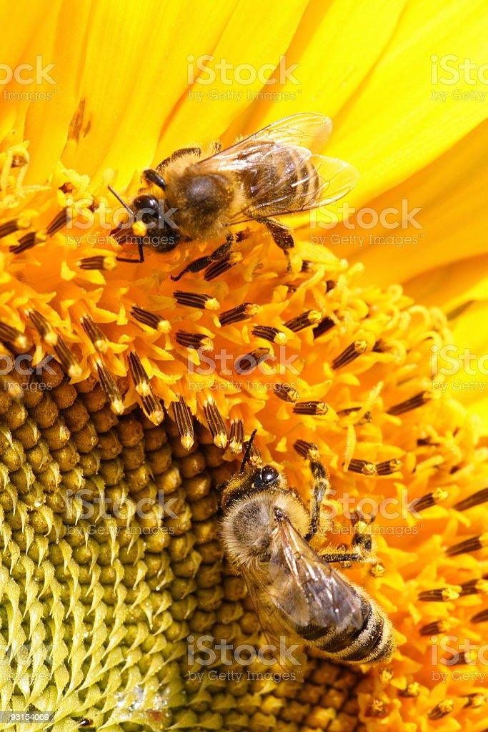 Nectar 5 royalty-free stock photo