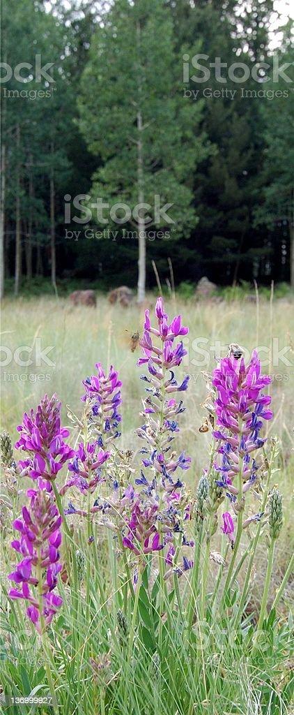 Nectar gathering stock photo
