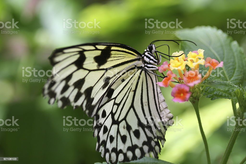 Nectar Lover stock photo