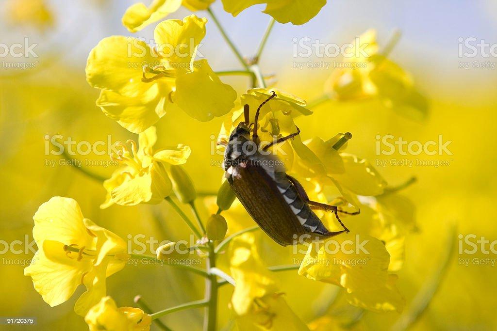 nectar stock photo