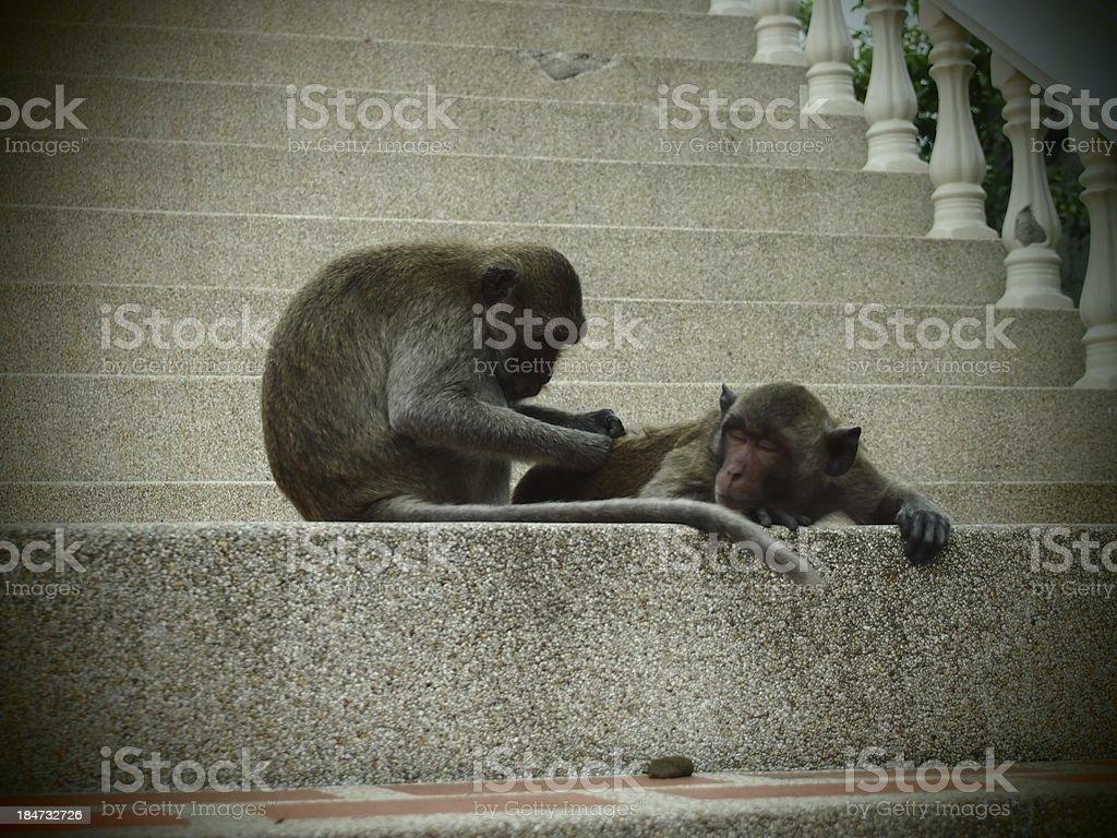 Need a hand monkey? stock photo