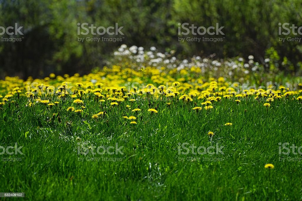 Need Lawn Care? stock photo