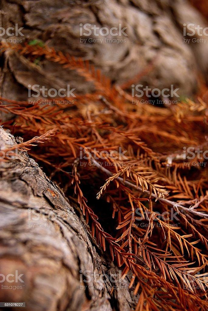 Needle Crevasse royalty-free stock photo