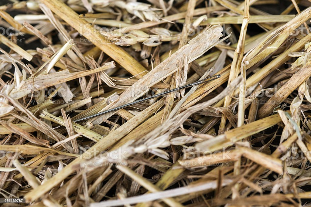 Needle in Haystack 1 stock photo