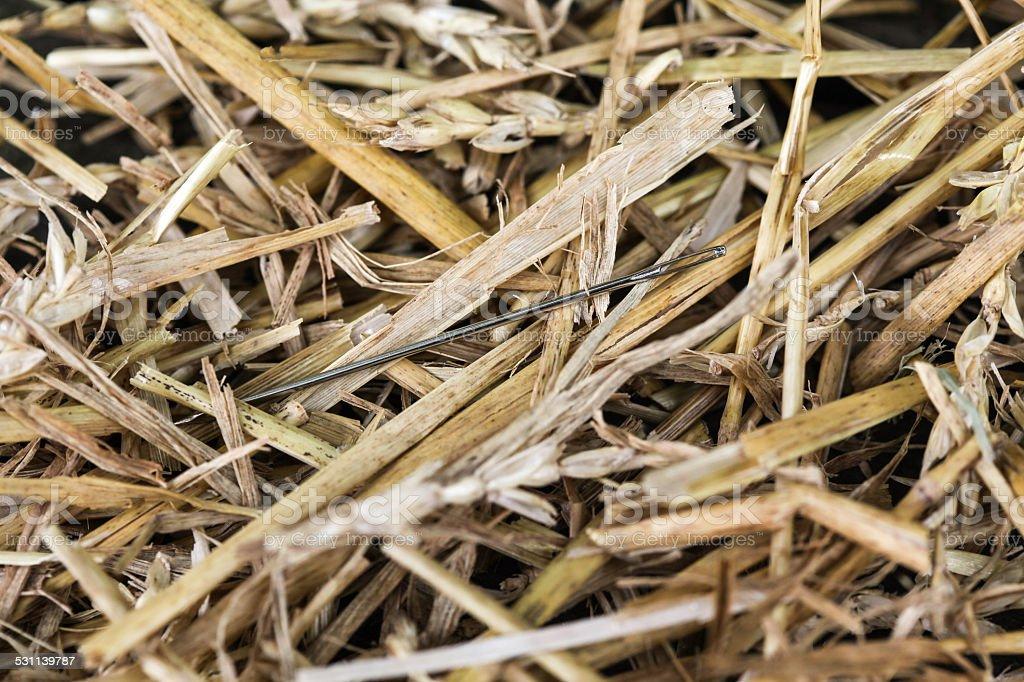 Needle in Haystack 1 stock photo