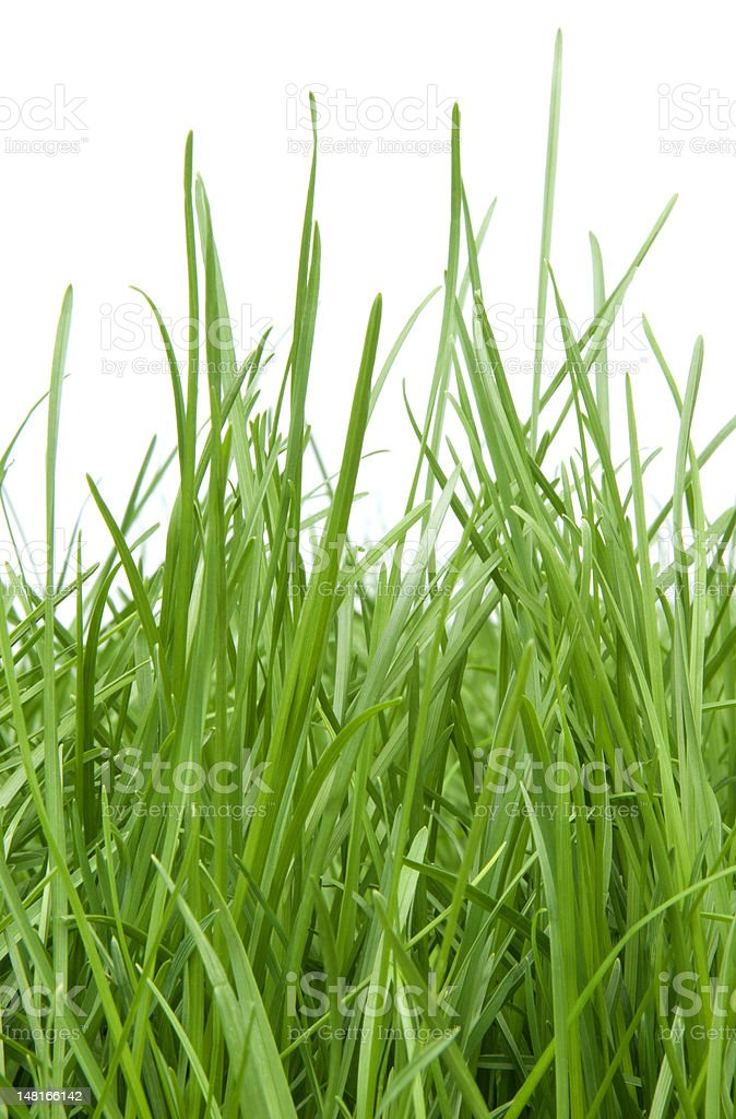 Needs Mowing... stock photo