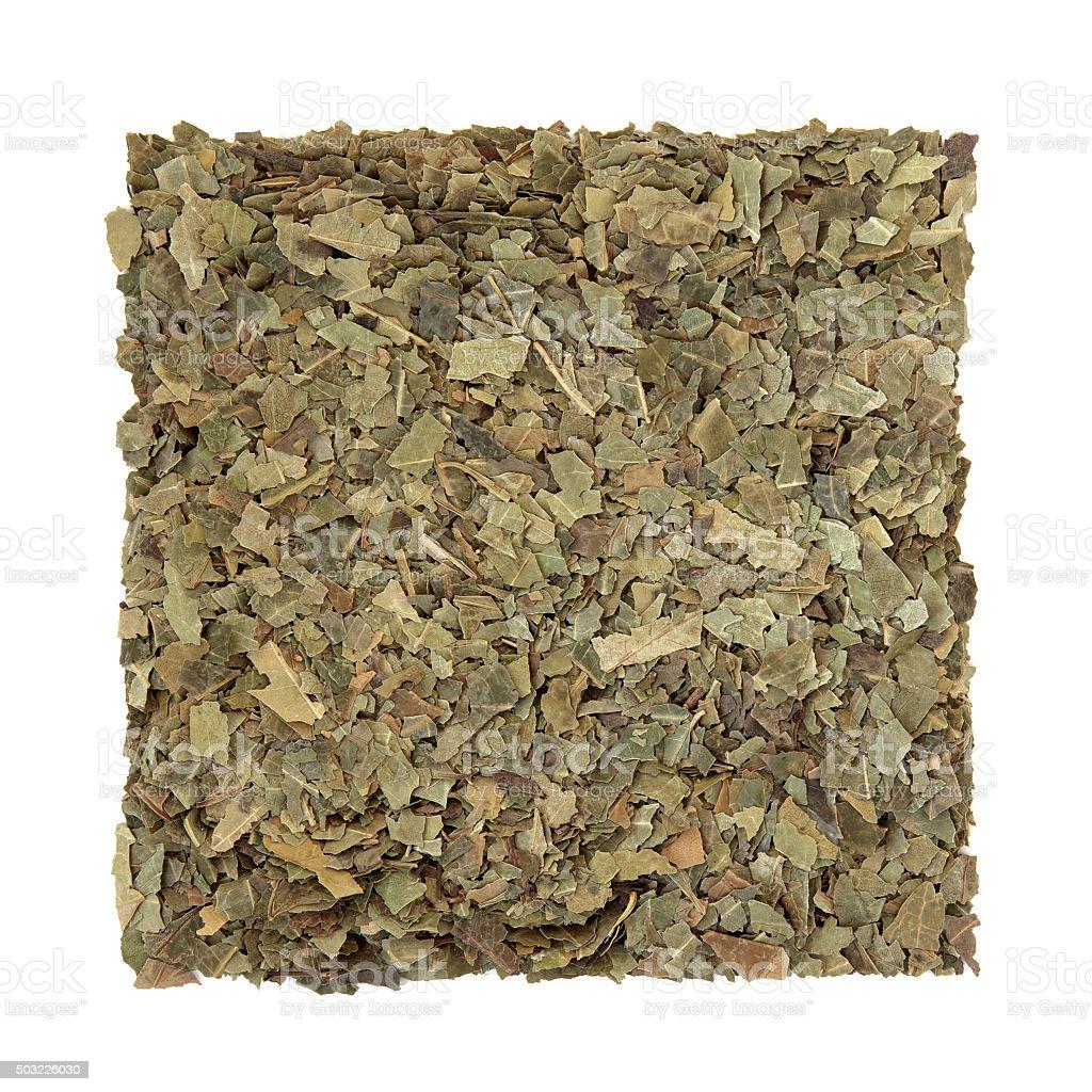 Neem Herb stock photo