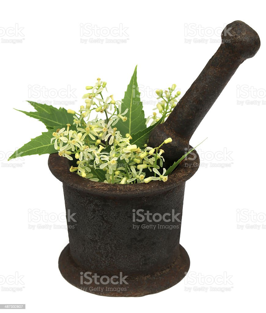 Neem leaves and flower on a vintage mortar stock photo