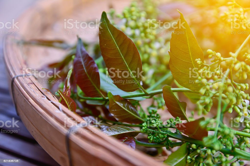 Neem leaves and flowers with sun light effect,vintage style. stock photo