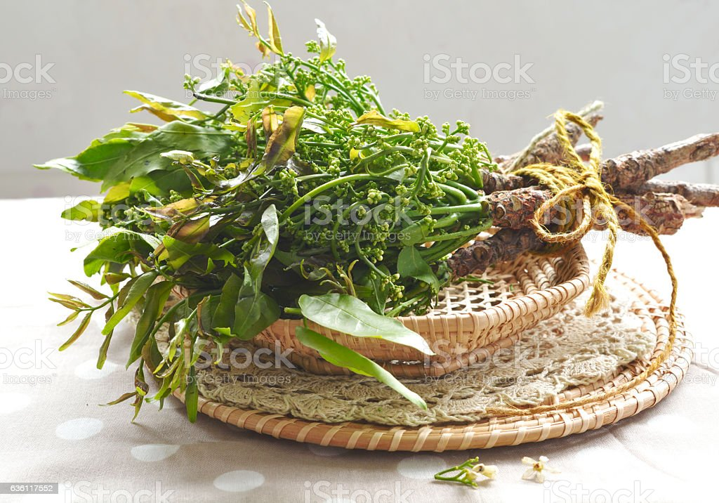 Neem leaves in a basket stock photo