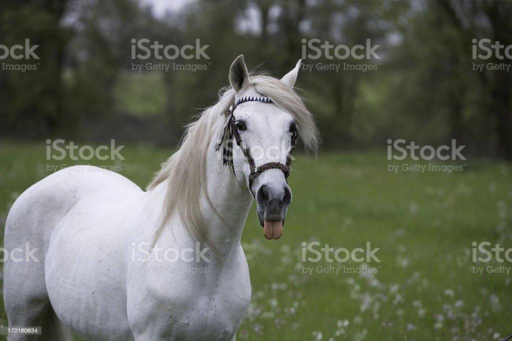 Neener x 2 royalty-free stock photo