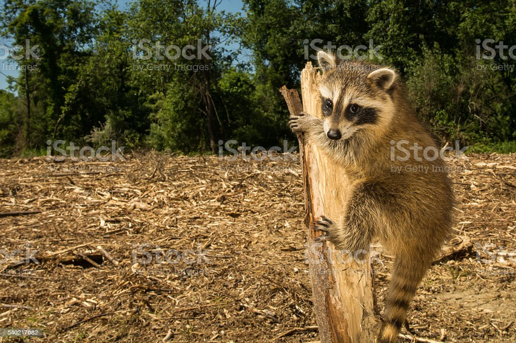 Negative effects of Deforestation stock photo