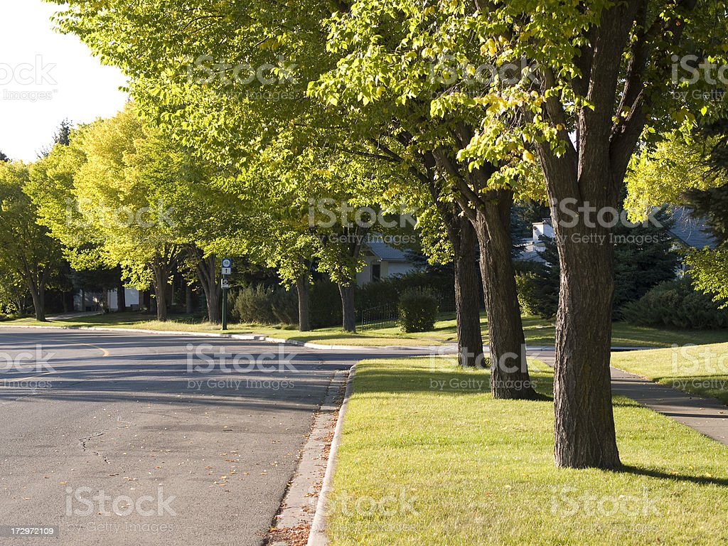 neighborhood street and trees royalty-free stock photo