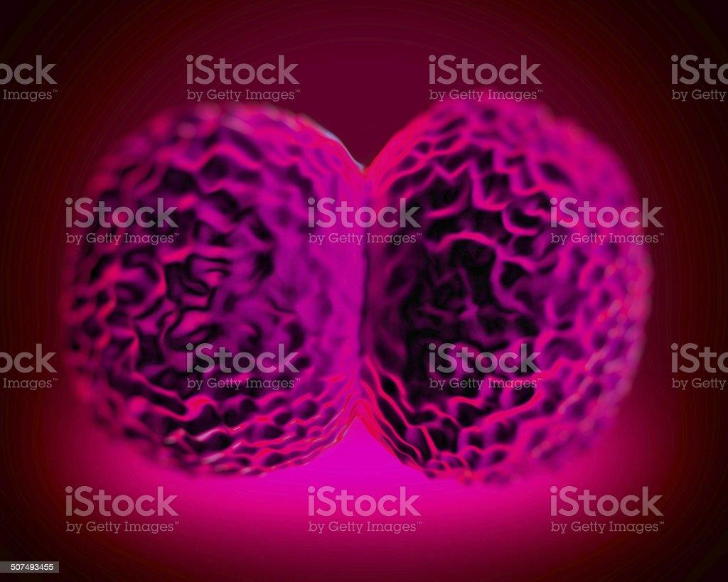 Neisseria meningitidis bacteria, artwork royalty-free stock photo