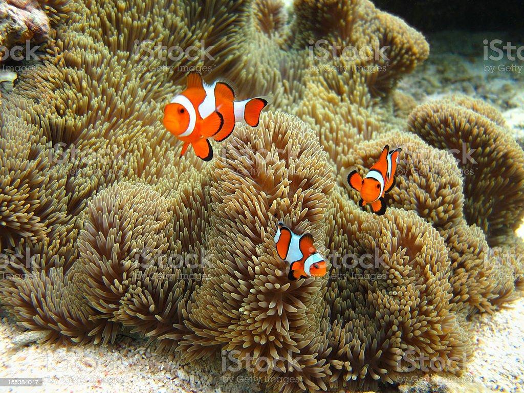 Nemo family stock photo