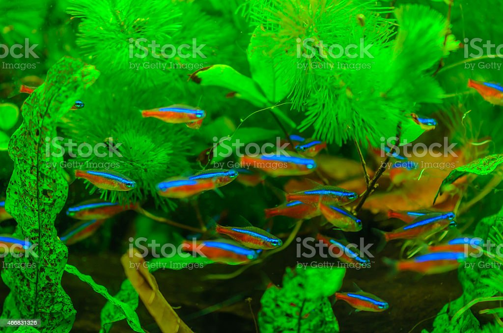 Neon Fish stock photo