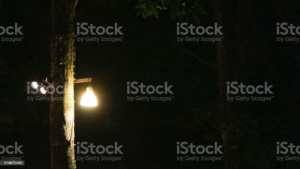 Неоновый лампочку висячими дерево Стоковые фото Стоковая фотография