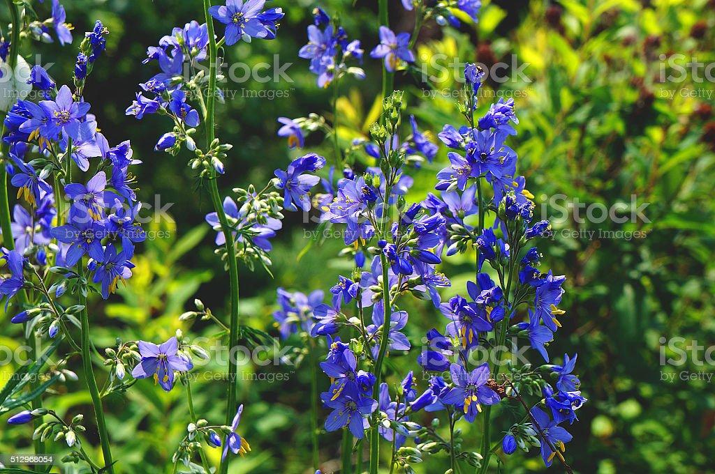 Fleurs sauvages néon photo libre de droits