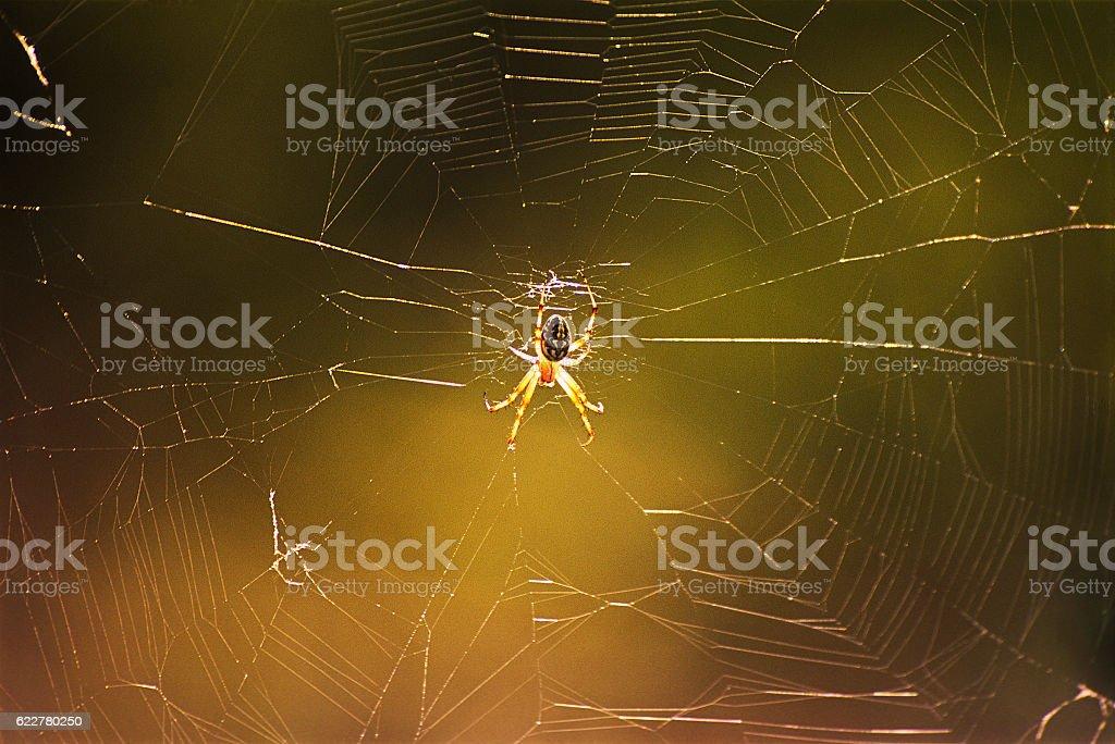 Neoscona adianta - Spider on the web. stock photo