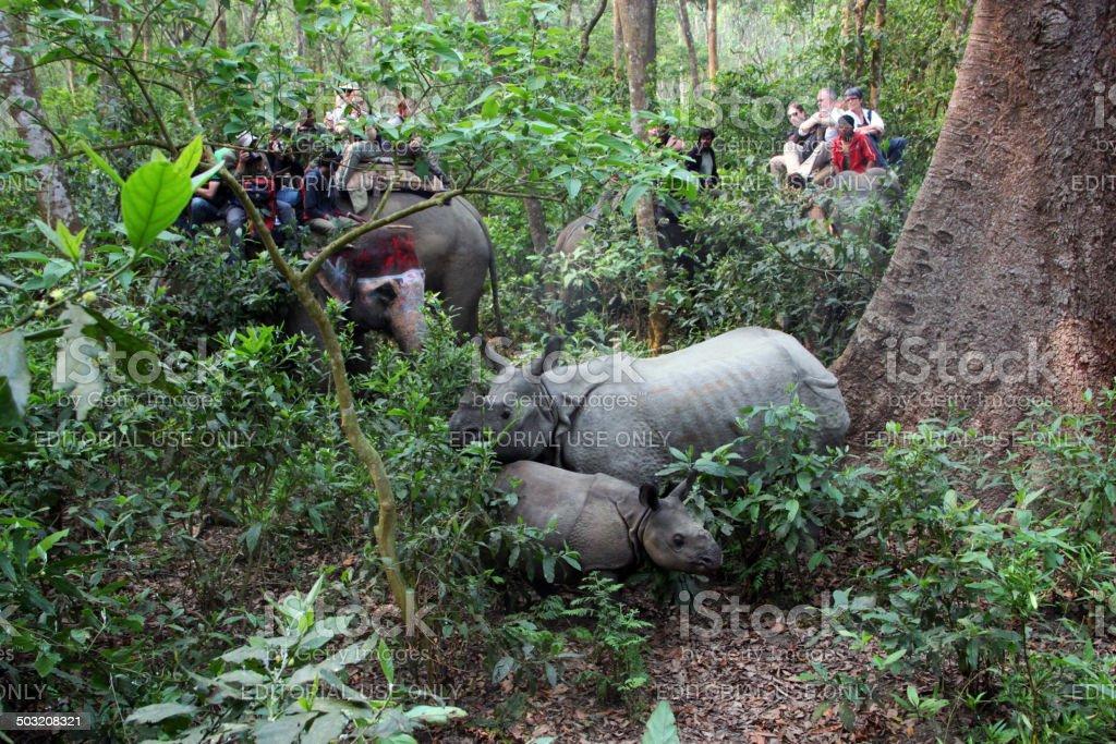 Nepal: Rhino at Chitwan National Park stock photo