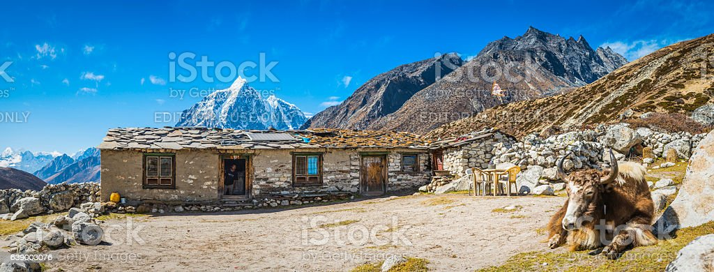 Nepal yak outside Sherpa teahouse high in Himalayan mountains panorama stock photo