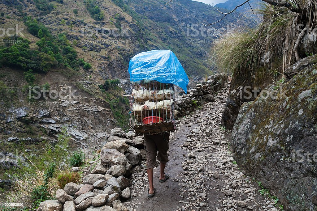 Nepalese Sherpa Hiking Mountain Trail Village .Young Man Climbing Loaded stock photo