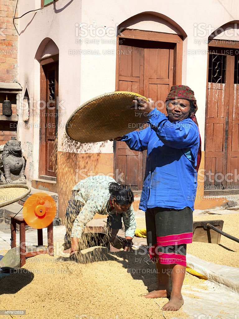 Nepalese women are cleaning and sieved the rice. stock photo