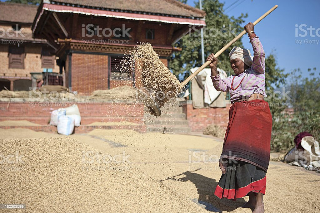 Nepali woman drying grain royalty-free stock photo