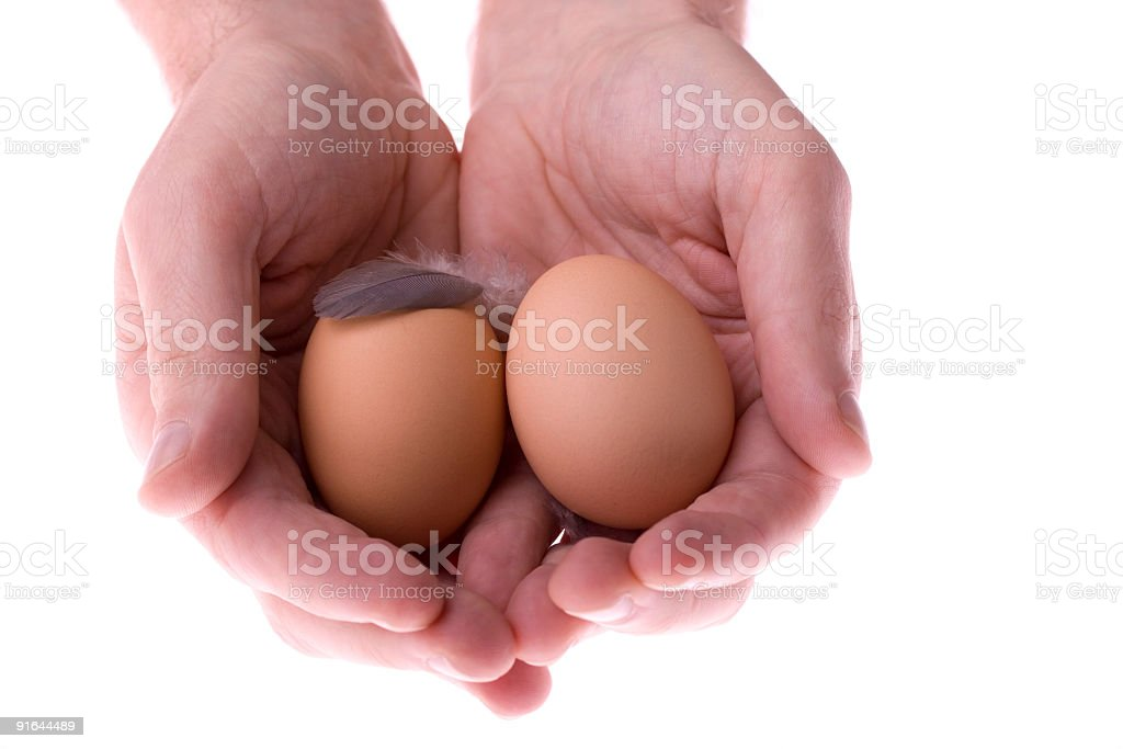 Nest egg close stock photo