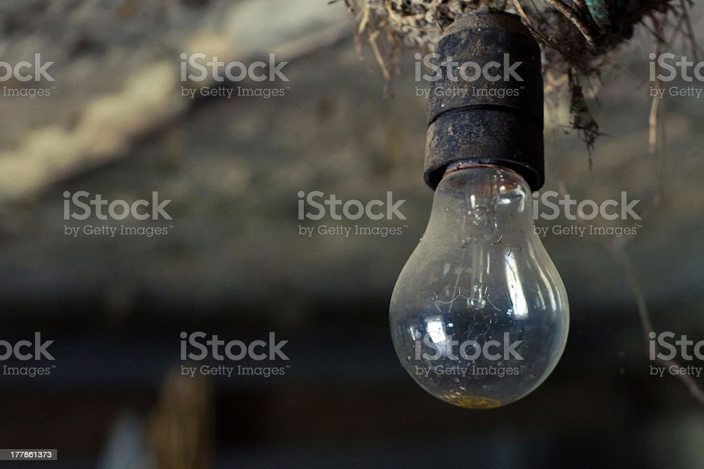 Nest into an old light bulb royalty-free stock photo