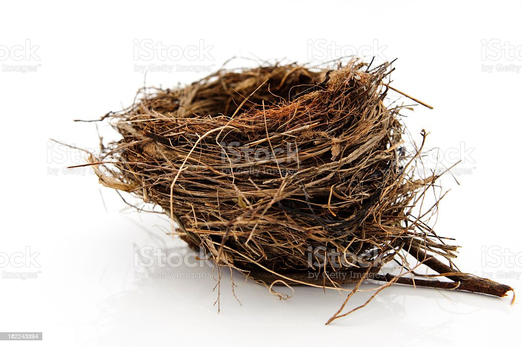 A nest of a bird on a white background royalty-free stock photo