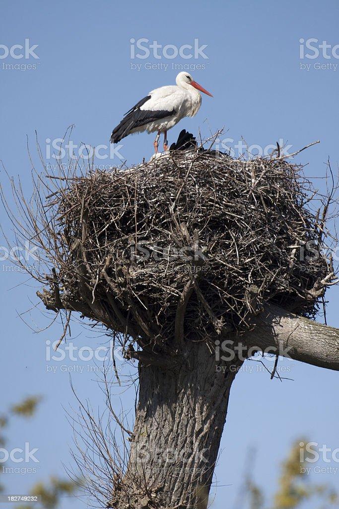 Nest of a Stork stock photo