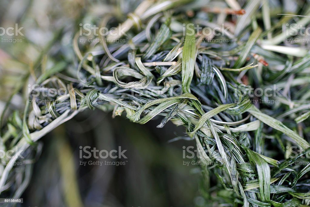 Nest of a Weaver royalty-free stock photo