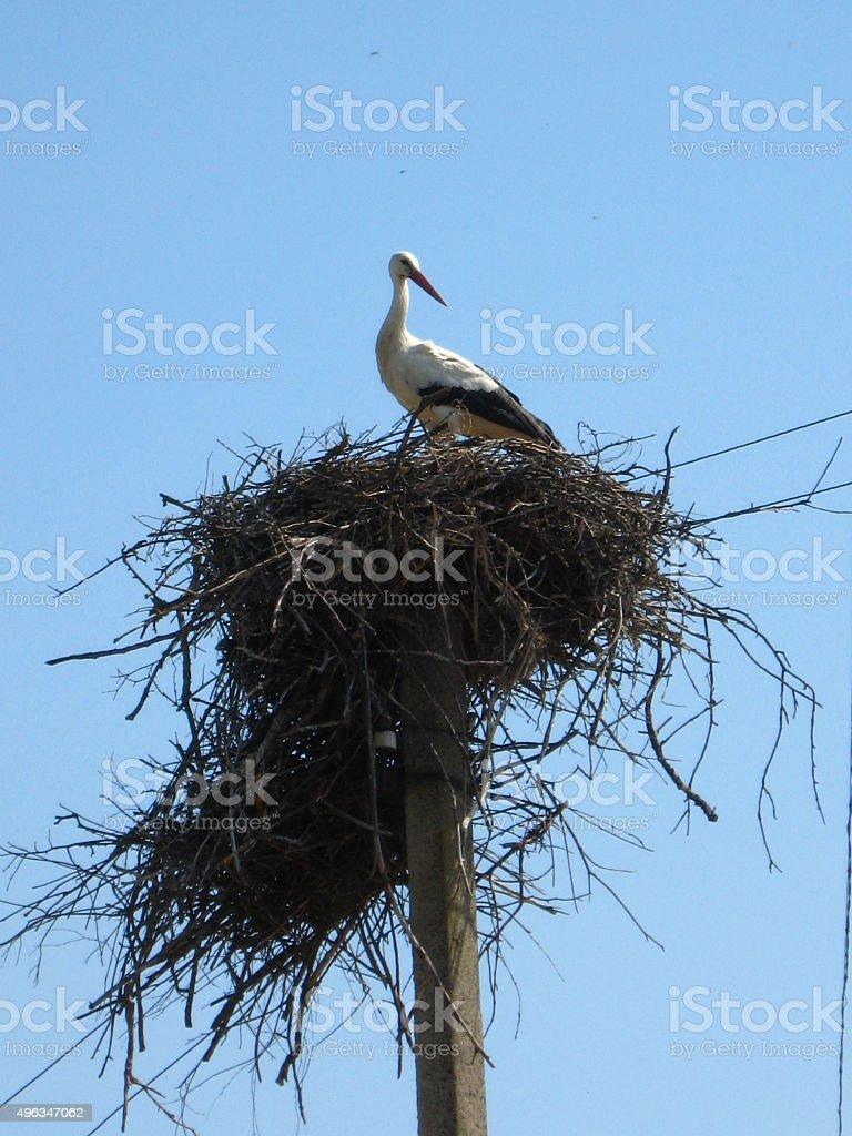Nest of storks in village stock photo